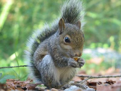 squirrel_big